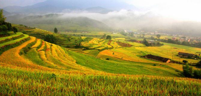 La FAO designa nuovi siti come patrimonio agricolo mondiale