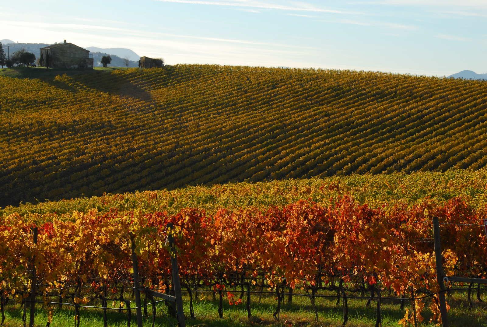 Sviluppo della filiera vitivinicola toscana
