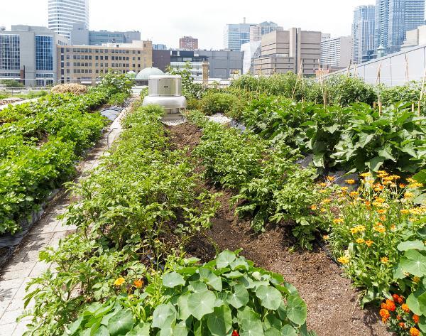 Sviluppo locale e rigenerazione urbana: tagli o incentivi all'agricoltura?