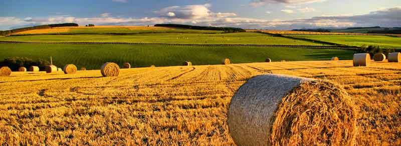 Bilancio 2015, misure a favore dell'agricoltura