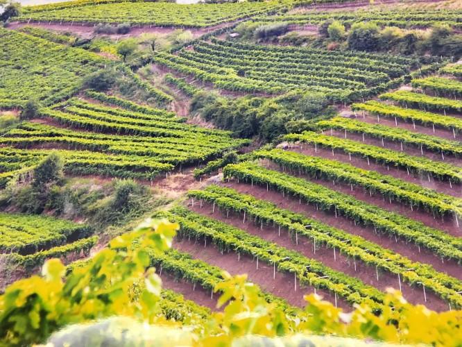 Soave patrimonio dell'umanità dell'agricoltura