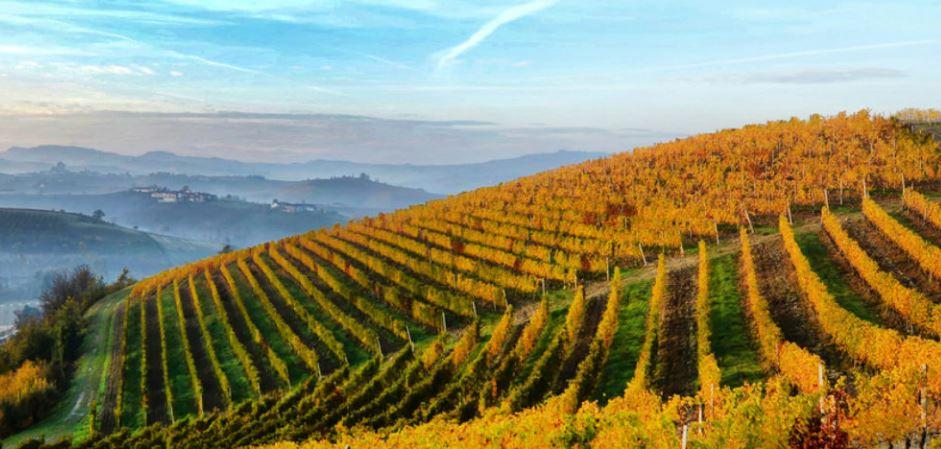 Il vino simbolo di gioiosa amicizia