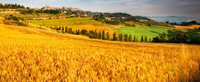 Sviluppo rurale, 42miliardi per la programmazione 2014-2020