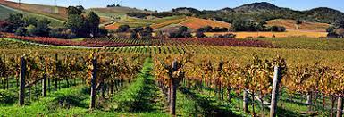 Nei Balcani lo stage di Città del Vino per giovani viticoltori