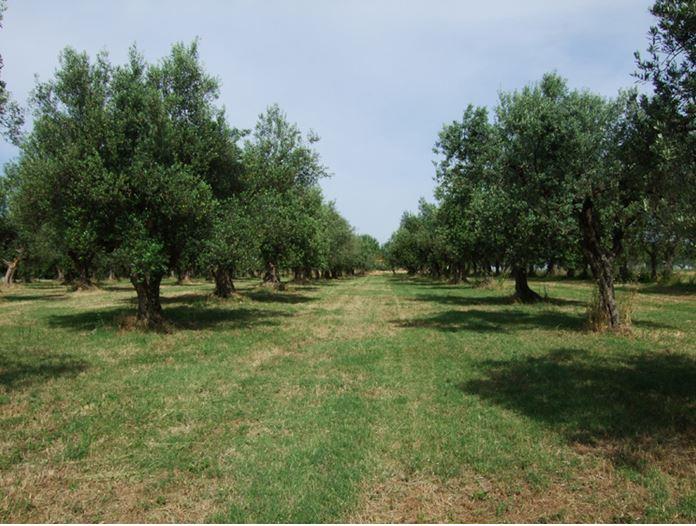 Esperienza, tradizione e coltivazione biologica