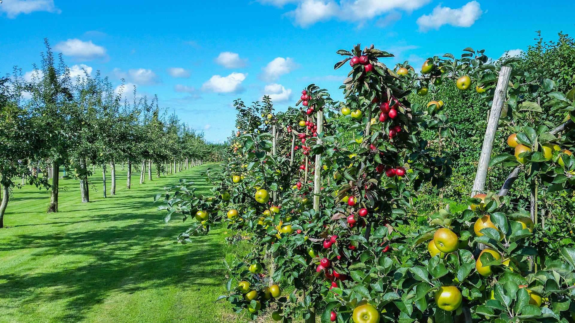 L'agricoltura vincente parte da una scelta intelligente