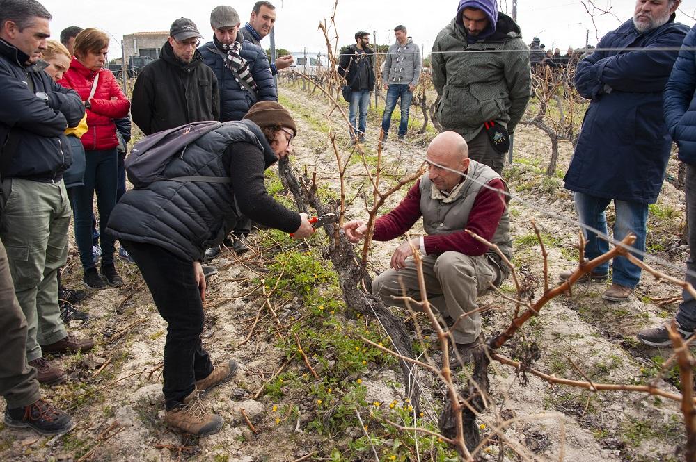 Sassari, concluso il corso di base di viticoltura