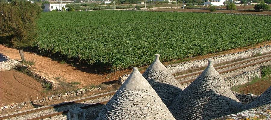 La Valle d'Itria nuova destinazione enoturistica di qualità