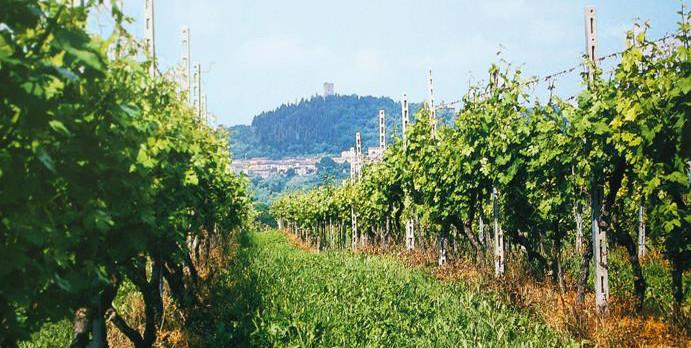 Diamo il benvenuto al Consorzio Vini Mantovani