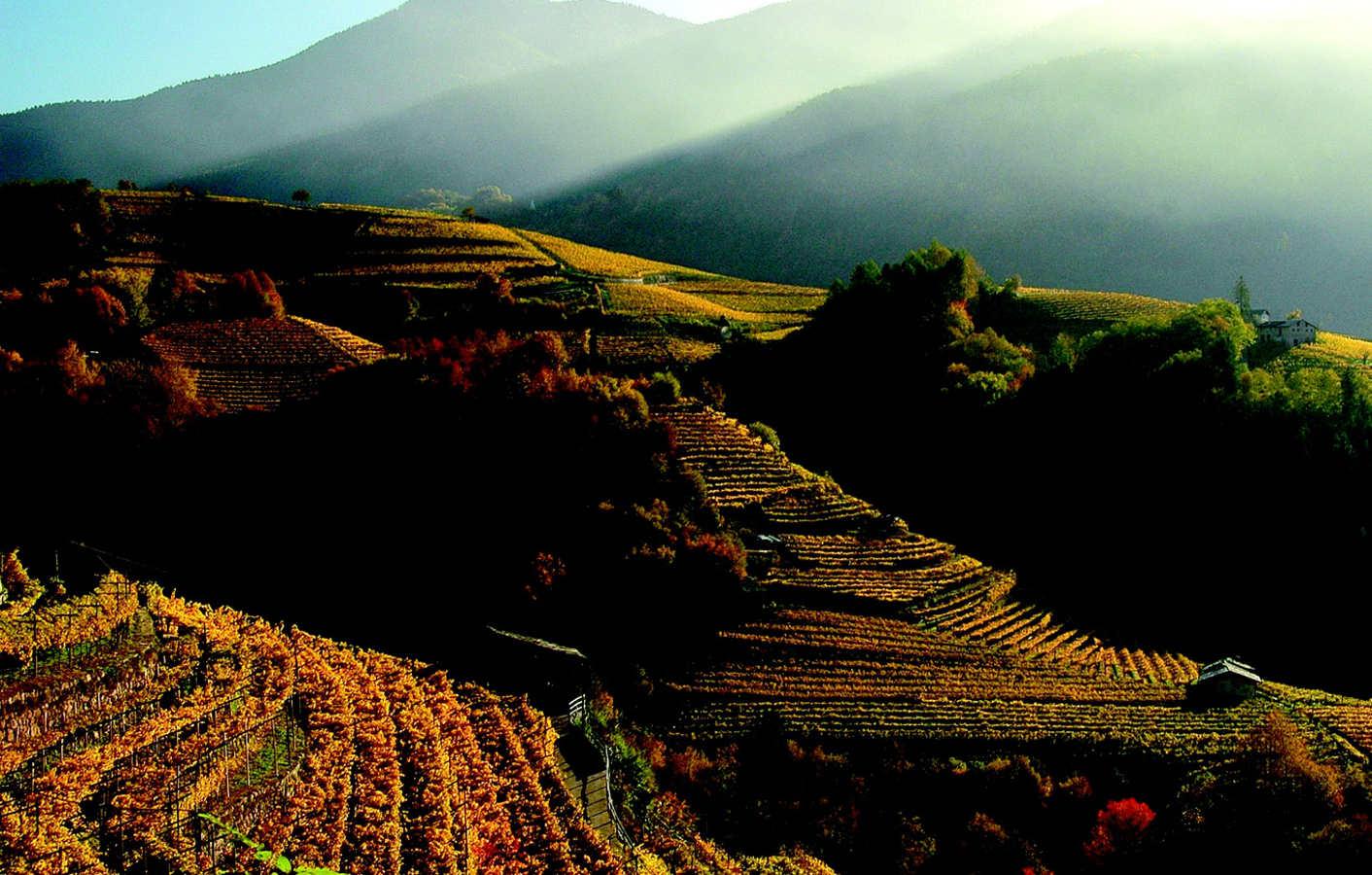 Vino di qualità ai primi posti per i visitatori del Trentino