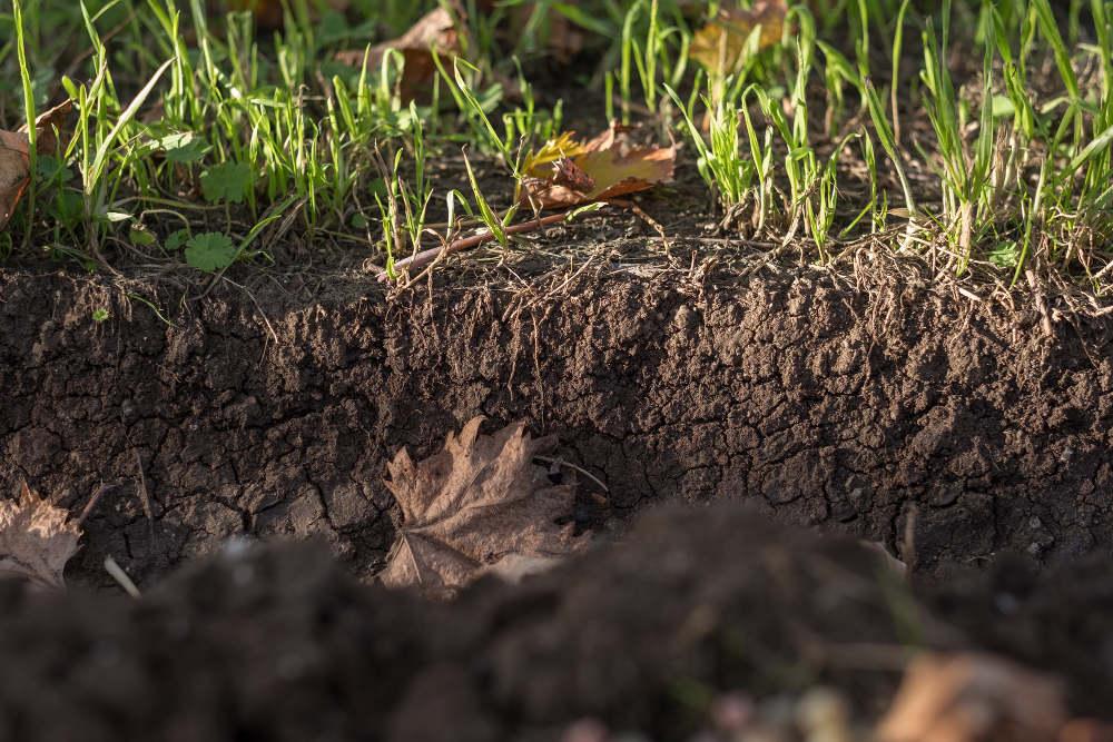 Un suolo fertile per produzioni di qualità