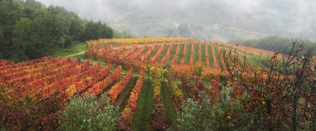 I valori economici, sociali e ambientali del vino