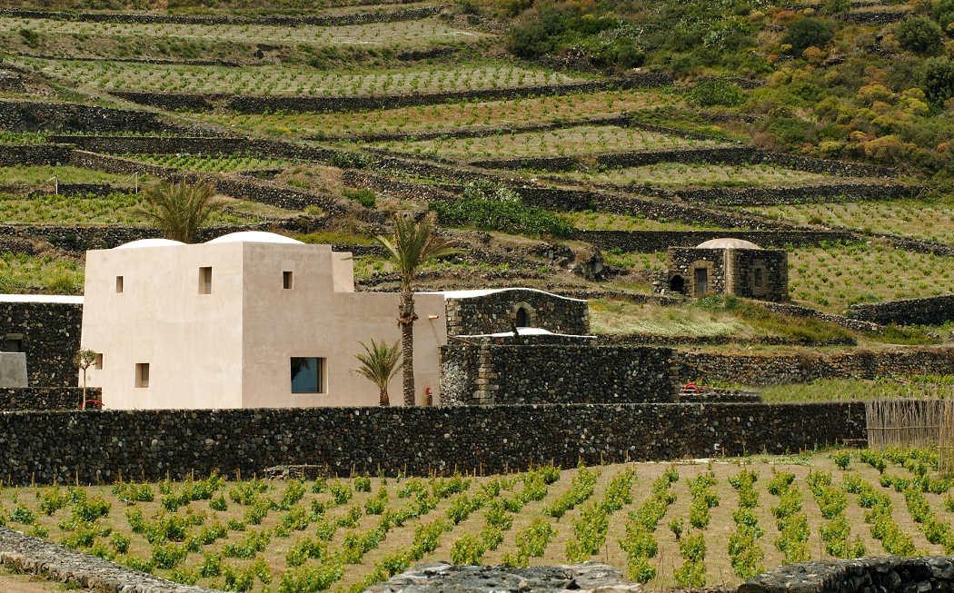 Pantelleria tra le migliori destinazioni di turismo del Vino