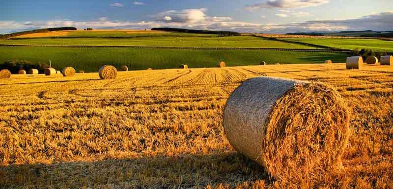 Mipaaf: approvato il piano Agricoltura 2.0