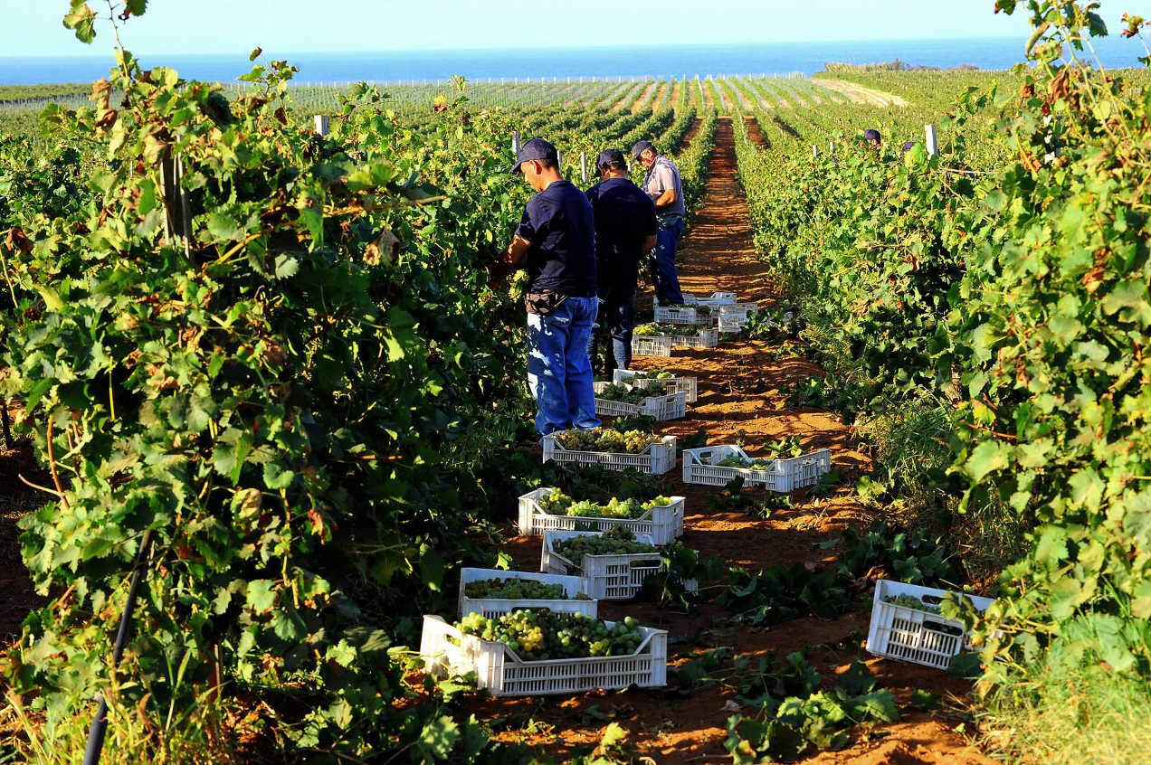 Sicilia: più qualità per la vendemmia 2019