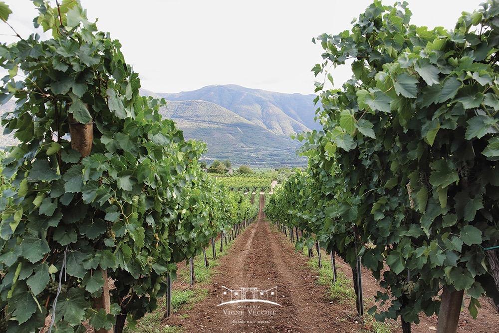 La grinta dei vini biologici