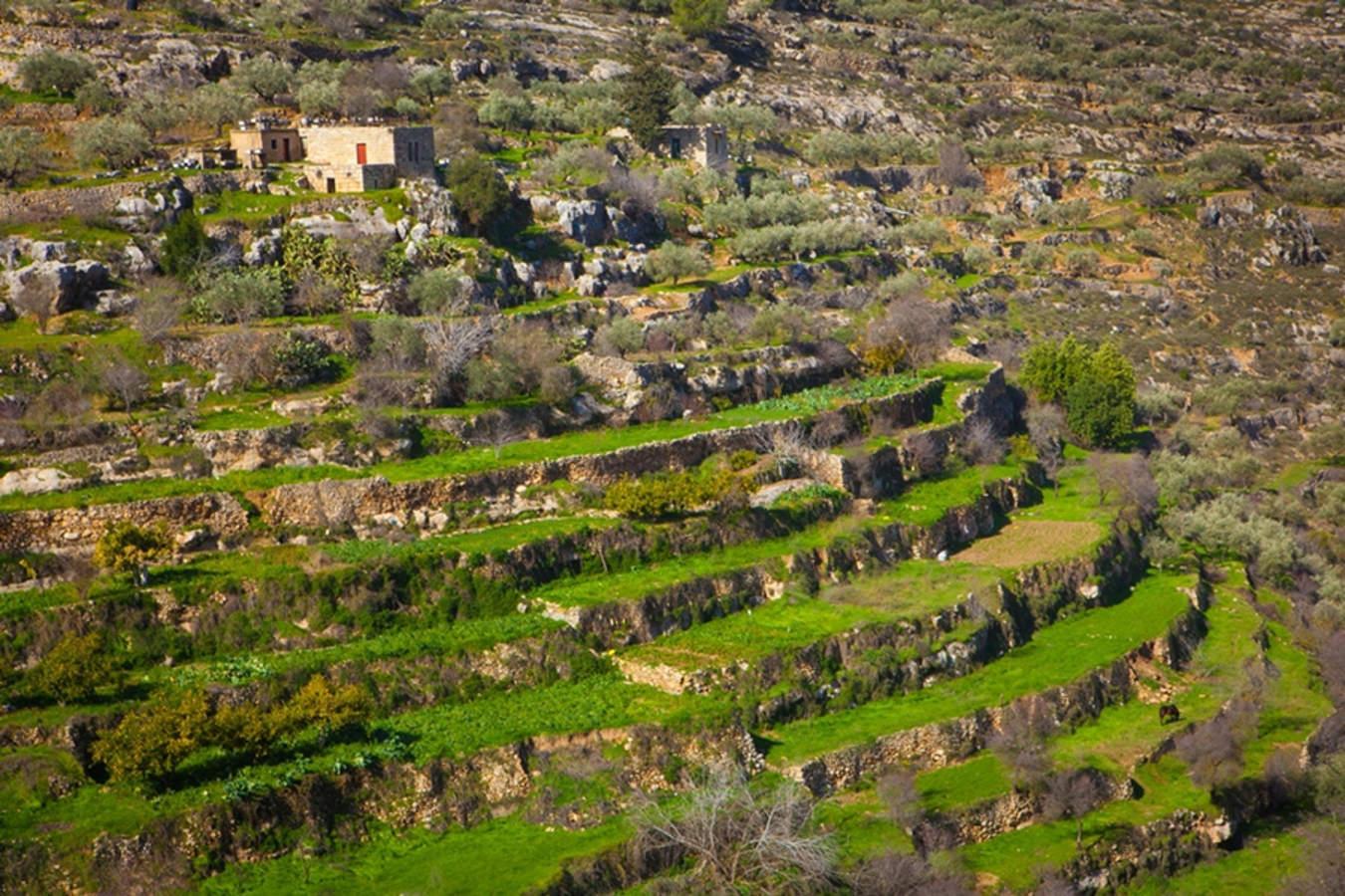 Stage per Giovani Viticoltori: torna l'esperienza formativa per giovani enologi, sommelier e viticoltori