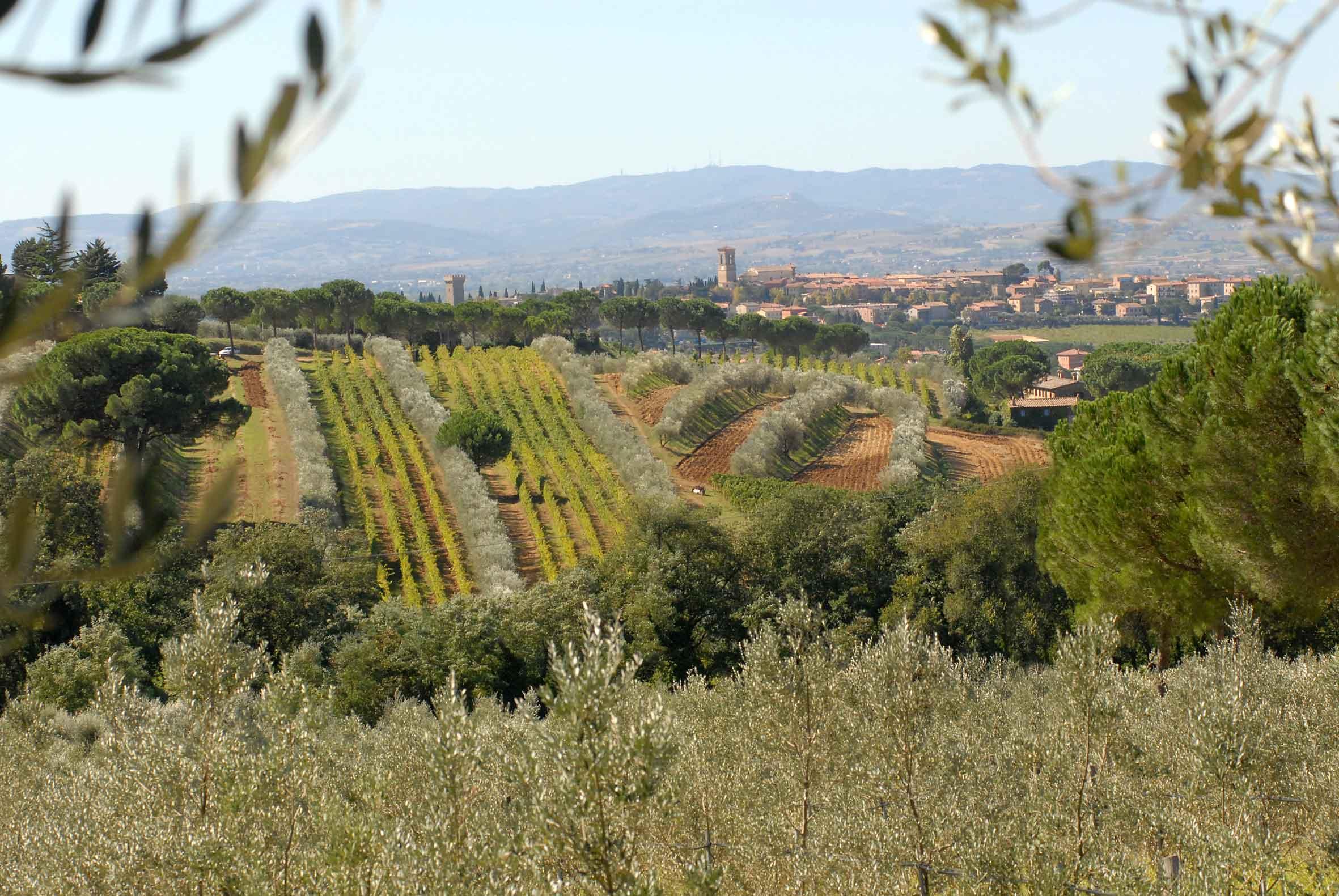 Master of Wine a Torgiano, si formano i grandi esperti del vino
