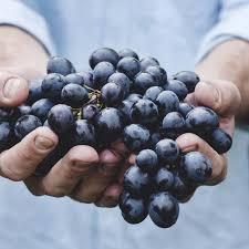 Tutela e valorizzazione del vitivinicolo biologico