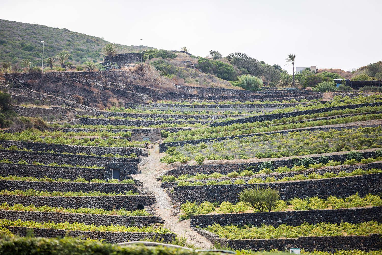 Consorzio Pantelleria Doc Erga Omnes