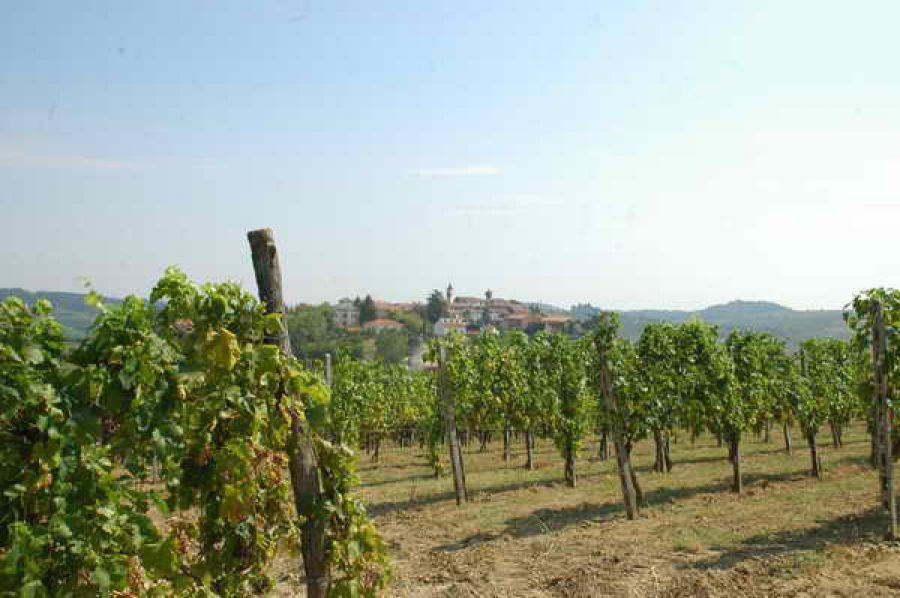 Auguri alla Barbera del Monferrato Superiore