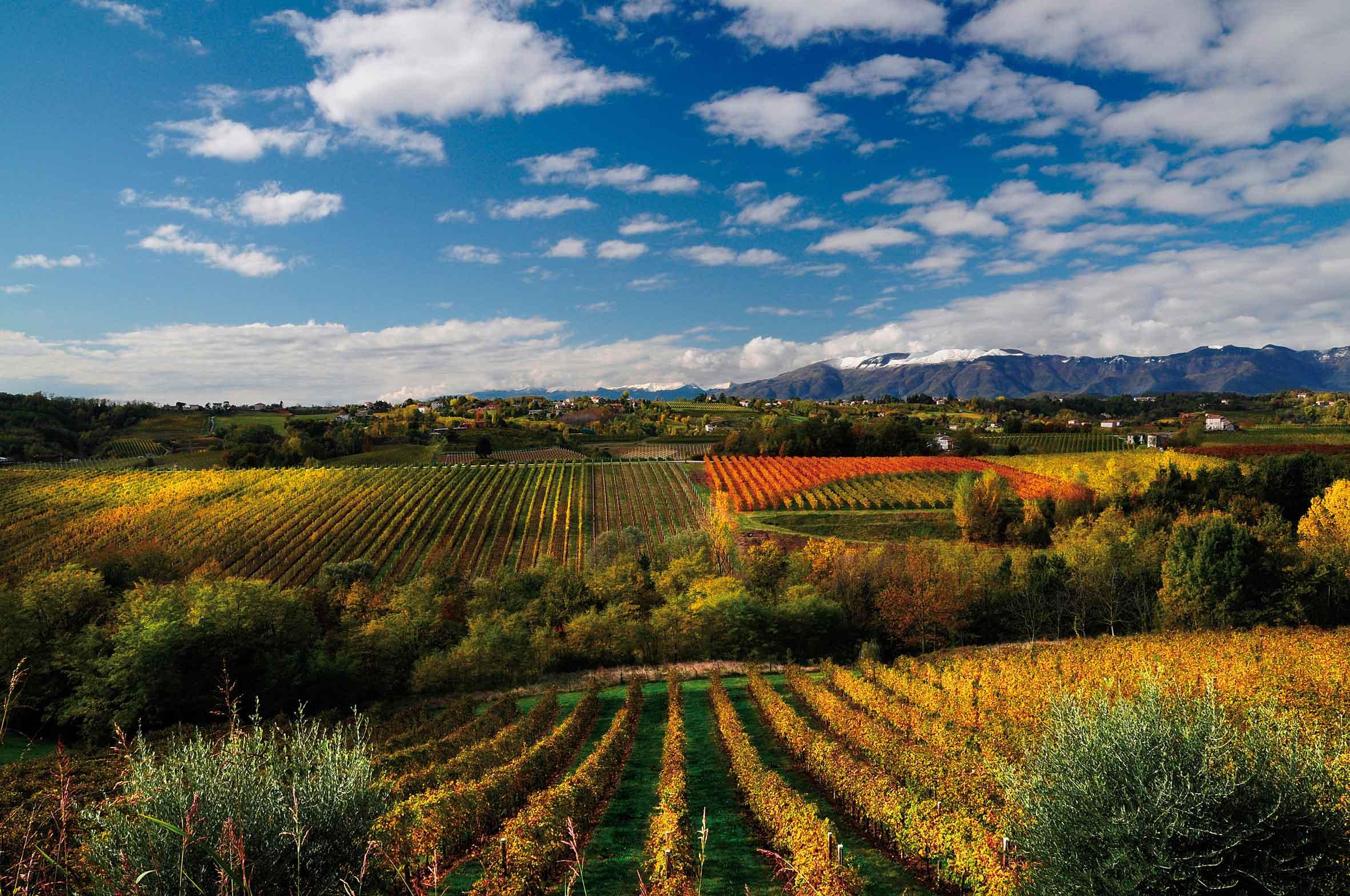 IMU terreni agricoli: cambiano le regole