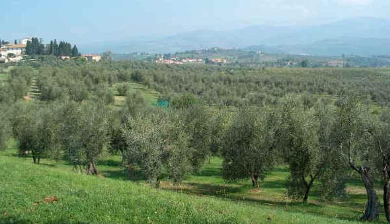 Città dell'Olio: al via il censimento dei paesaggi olivicoli che ambiscono ad entrare nel Registro Nazionale dei Paesaggi storici
