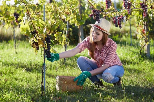 Giovani viticoltori alla scoperta di Cipro: porta della civiltà del vino in Occidente