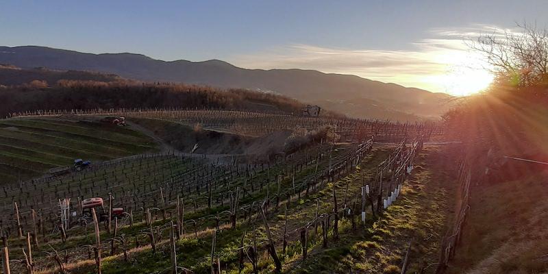 Italia-Slovenia: alle radici del vino