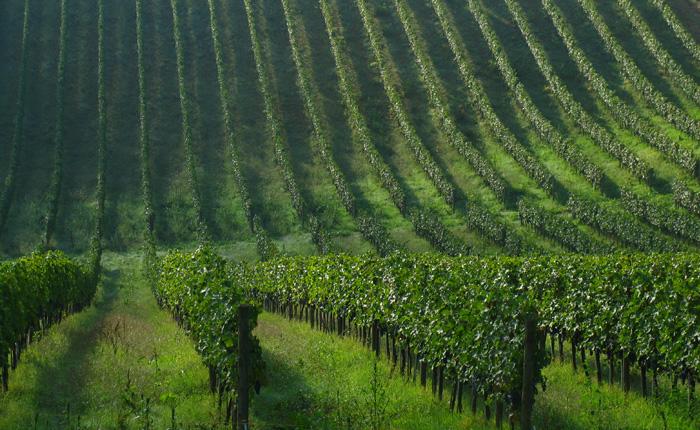 Wine Kit: vinta la battaglia a tutela del vino italiano