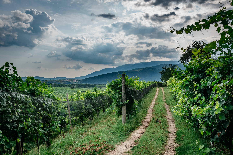 Lettera alla Ministra: le proposte per sorreggere il comparto vitivinicolo