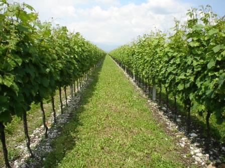 Auguri al Friuli Grave