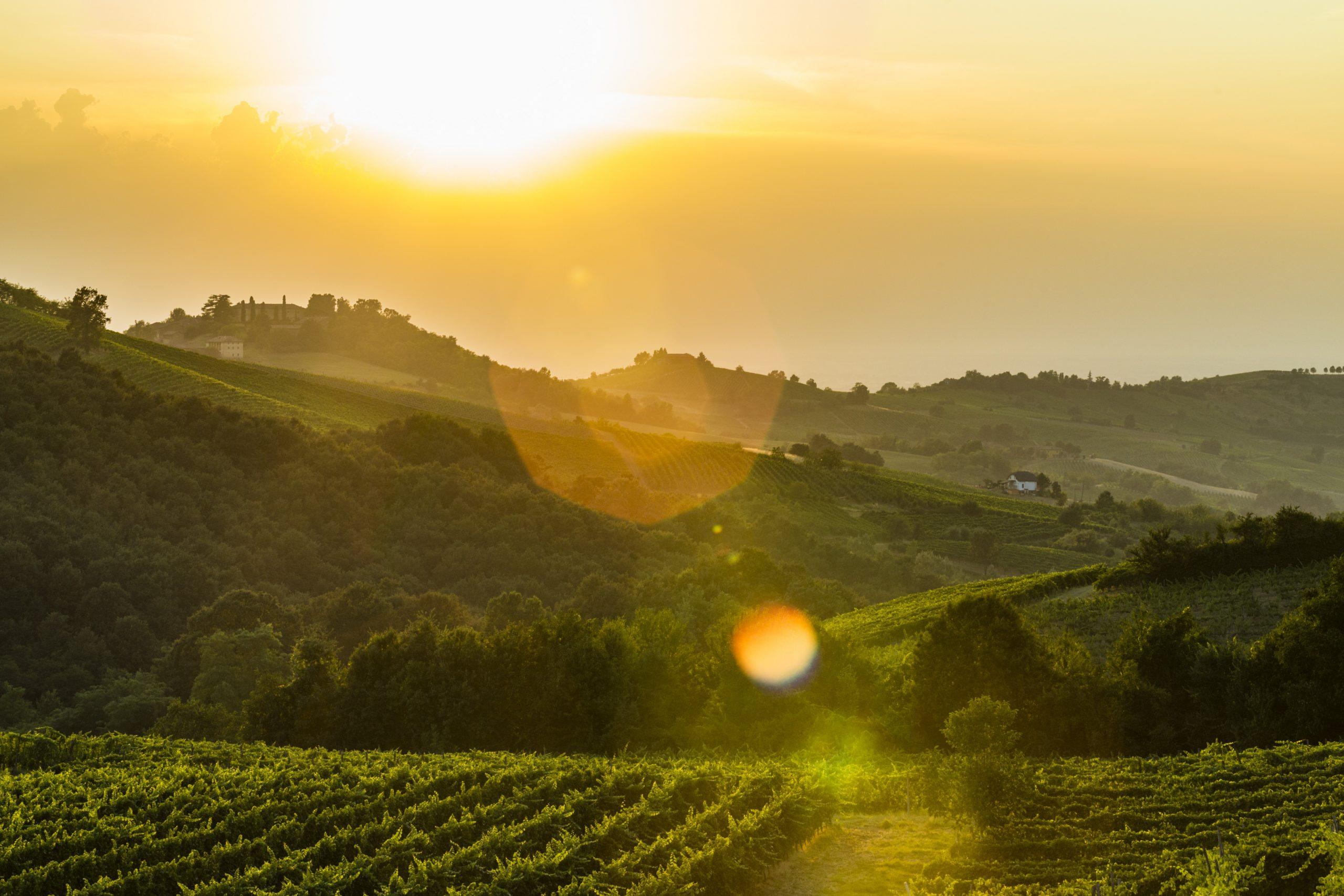 Auguri al Bonarda dell'Oltrepo' Pavese