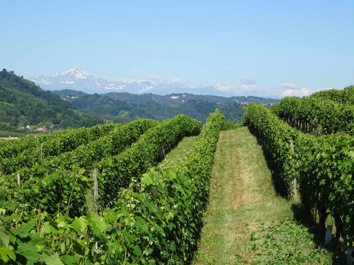 Passione per il vino dal 1467