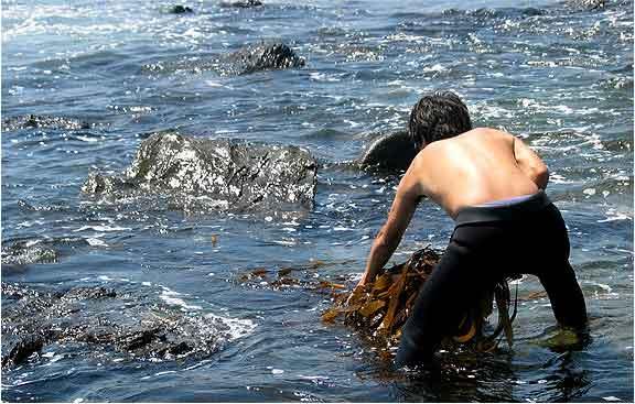 Macis BC28: la massima efficacia delle alghe