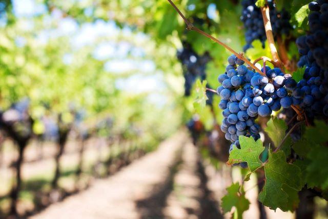 All'Italia premio OIV per miglior testo di diritto vitivinicolo