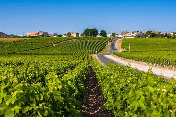 Al via OCM Promozione Vino