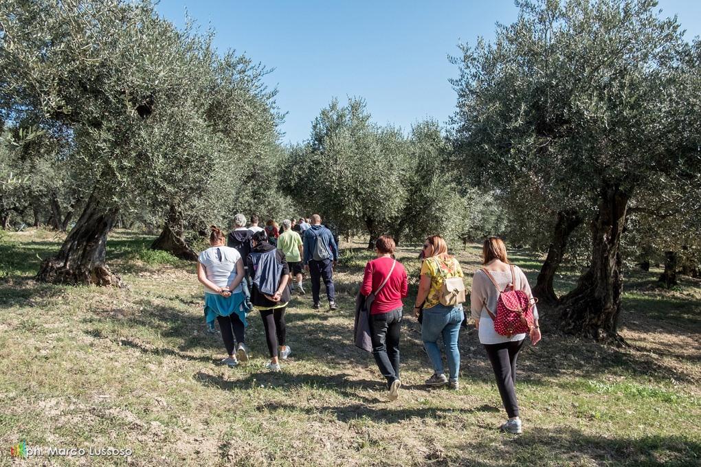 Camminata tra gli Olivi: 84 Città dell'Olio insieme   per scoprire i paesaggi olivetati e l'olio nuovo