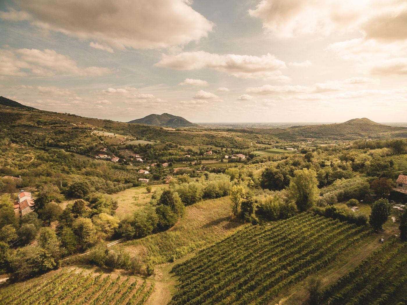 I vini di Vo' vincono il Travel Food Award 2020