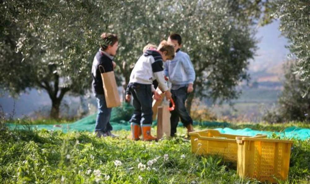 L'Italia del Turismo dell'Olio si mette in gioco