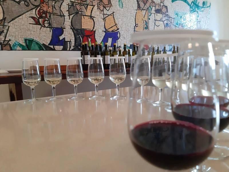 """Vitigni """"resistenti"""": dal grappolo al bicchiere"""