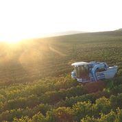 Dalton Winery: Passione e amore per il territorio