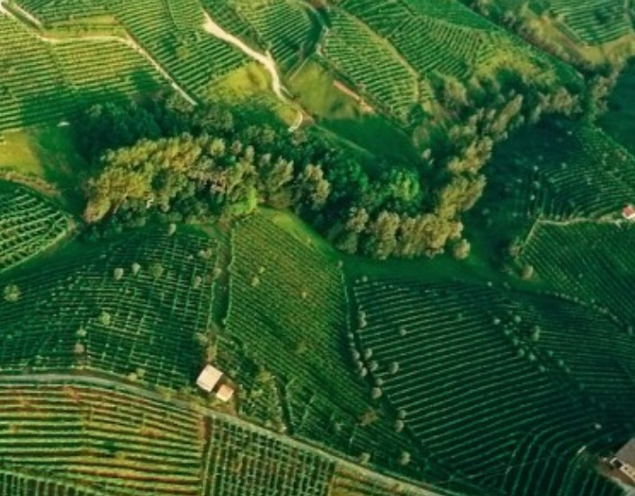Prosecco Superiore DOCG a Wine Future 2021