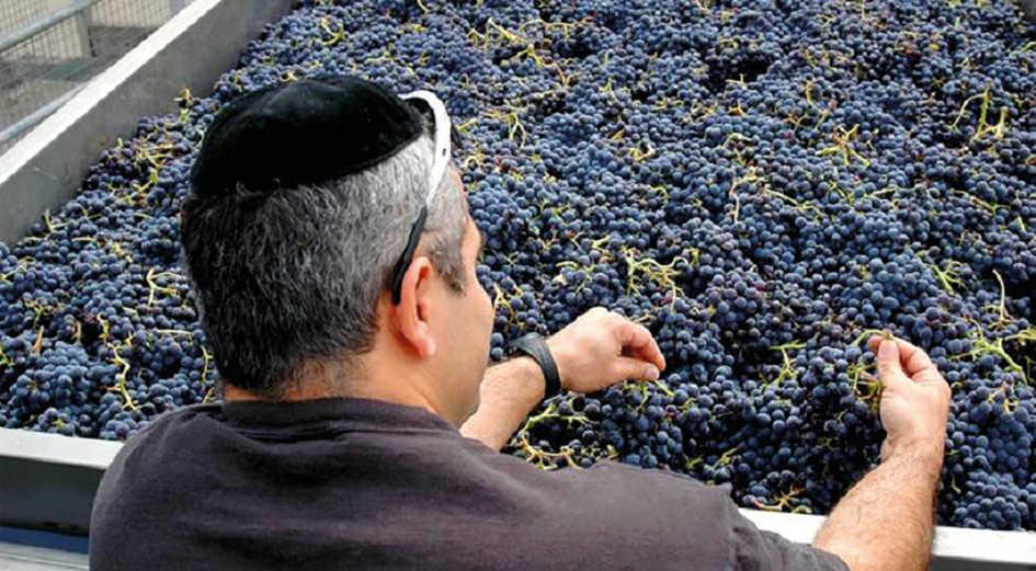 Il Vino Kosher In Italia