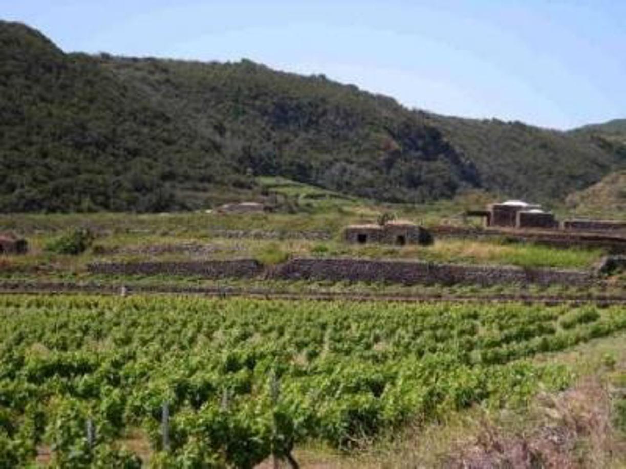La viticoltura eroica di Favignana a Expo 2015