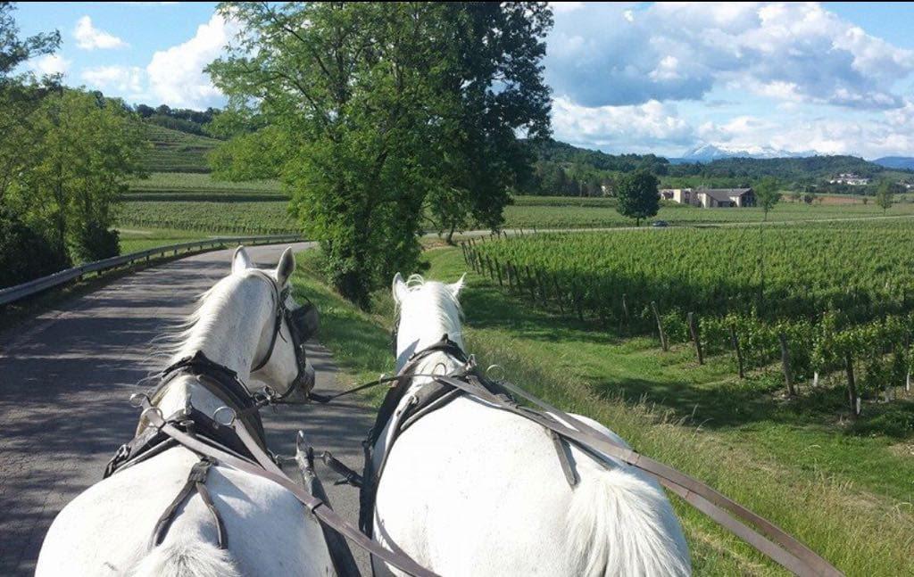 Prepotto, Terra dello Schioppettino: il territorio ad alta vocazione nei Colli Orientali del Friuli