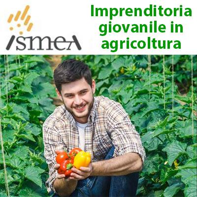 Imprenditoria giovanile in agricoltura: finanziamenti e contributi