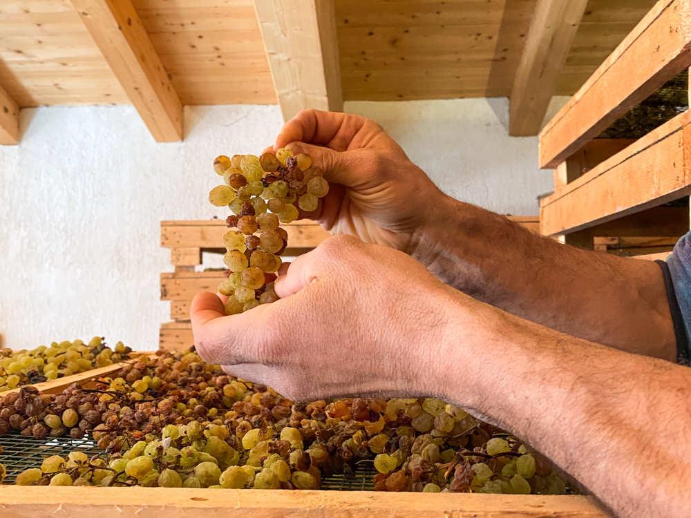 L'antico rito collettivo del Vino Santo Trentino