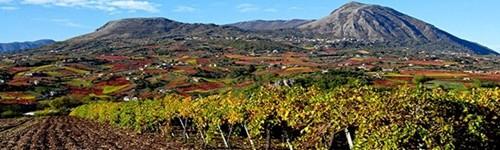 Città del Vino: al via la collaborazione con la Regione Campania