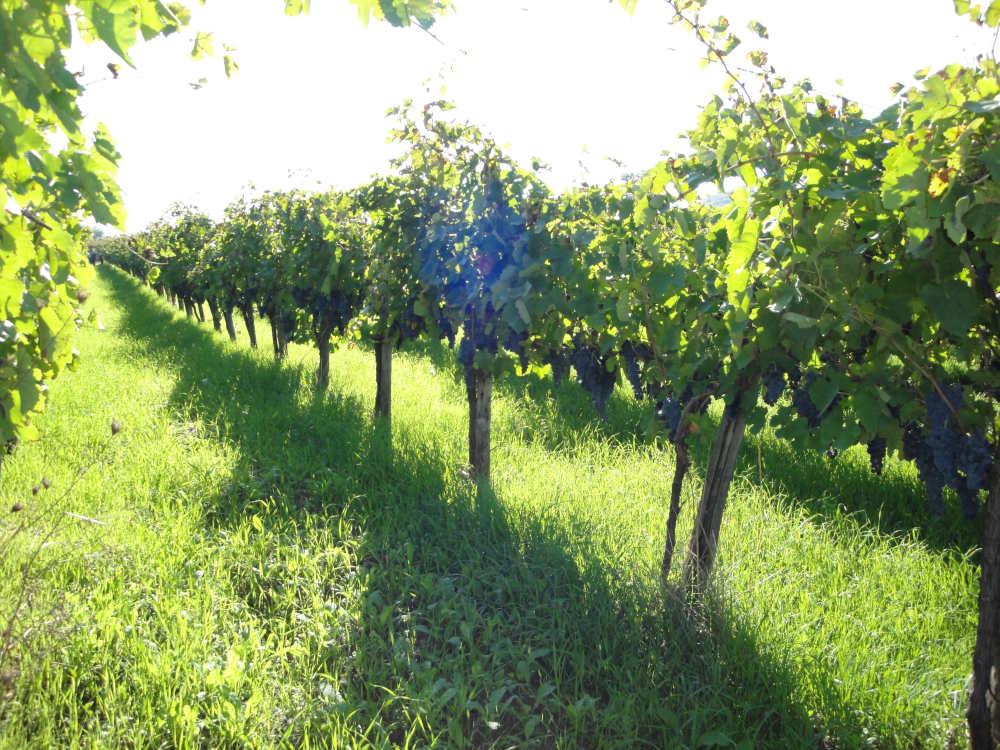 Da oltre un secolo produce il vino buono
